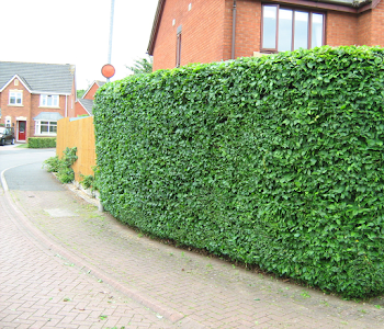 perfect hedge trimming worcestershire