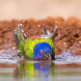 Žeja  by Janez Žalig - Animals Birds ( žeja, vročina, kopanje, jezero, voda )