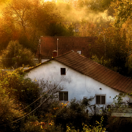 by Milanka Dimic - City,  Street & Park  Neighborhoods ( light, sunset, houses, golden, trees, forests )