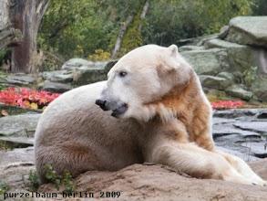 Photo: Knut hat wieder seine Ruhe ;-)