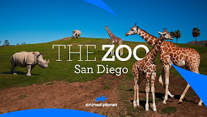 The Zoo: San Diego thumbnail