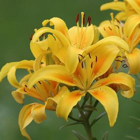 by Noel Kapica - Flowers Flower Gardens