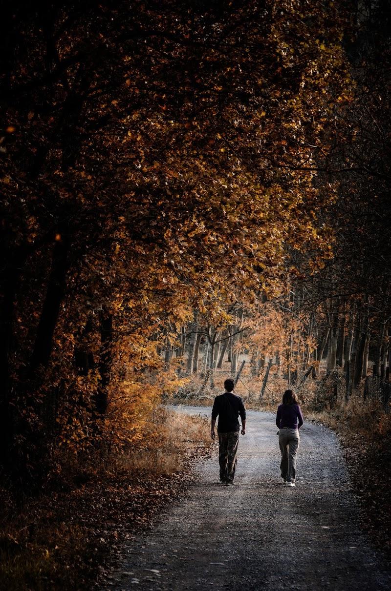 Passeggiando al limitar del bosco di Livius