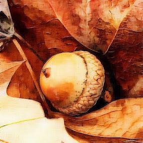 Lonely acorn by Pamela Hammer - Illustration Flowers & Nature ( abstract, oak leaves, illustration, acorn )