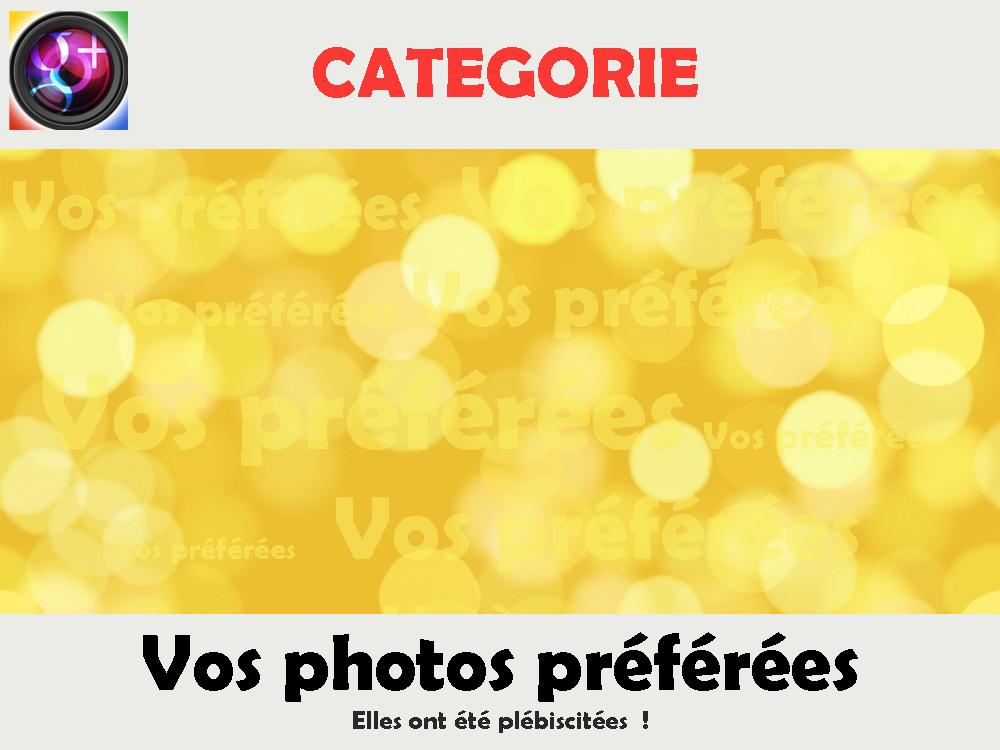 Photo: 30VOS PHOTOS PREFEREES  Cette rubrique est réservée au modérateur qui y déplace les photos élues. Merci de ne rien publier ici.  ------------------------------------------------------------------------------- FONCTIONNEMENT -------------------------------------------------------------------------------  Toute photo qui obtient au moins +30 en 2 jours gagne définitivement sa place dans cette rubrique.  Les membres élisent ainsi leurs photographies préférées en leur attribuant un +1.