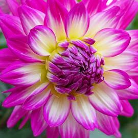 Budding Bloom by Millieanne T - Flowers Flower Buds