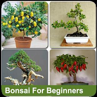 Bonsai For Beginners - náhled