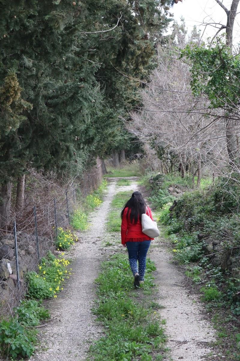 Promenade di anastasiaurru