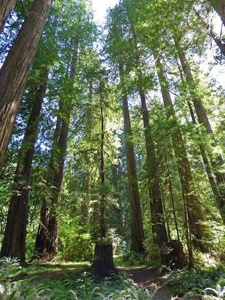 Howland Hill Scenic Drive, Jedediah Smith Redwoods State Park