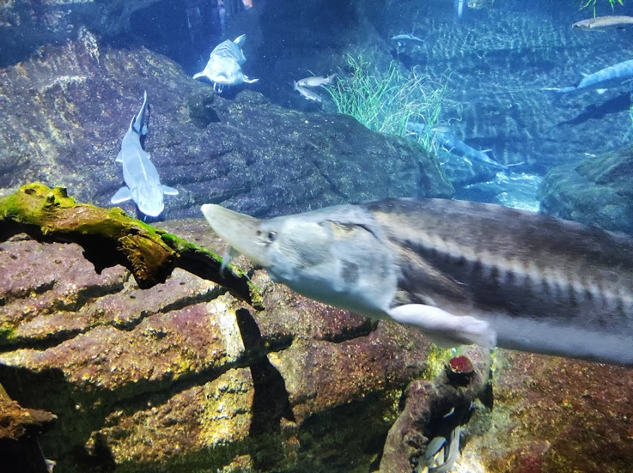 Foto Aquarium - El Acuario de Barcelona 16