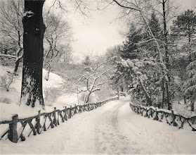 """Photo: """"Ghost shiver..."""" (my reasons why I love plus listed below in the content of this post)  I think back to days spent wrapped in the cold silence of freshly fallen snow in Central Park.  The labyrinth-like path leading from Shakespeare Garden lined by a wooden fence twists and turns in the snow winding its way under trees whose branches reach out to each other like eager arms awaiting the warmth of an embrace.  It's on days like this when the sun rests longer than usual and winter's essence seeps through every crack and crevice that the earth quivers a ghost shiver that rests in summer's memory.  —-  The rustic wooden fence rests on a four acre section of Central Park known as the Shakespeare Garden which is located in the west part of the park near 79th Street. On the 300th anniversary of William Shakespeare's death in 1916, this area was dedicated to Shakespeare and named. The plants and flowers that are found in this area are all mentioned in the works of the playwright and are also plants and flowers that are found in his garden in Starford-upon-Avon. There is even a white mulberry tree on this four acre plot of land that is said to have grown from a graft of a tree planted by Shakespeare himself in the 1600s.  While the paths that winds through Central Park's Shakespeare Garden is gorgeous in the warmer months of the year, it's absolutely stunning when snow has freshly fallen.  This photo was taken during one of the last major snowstorms (a blizzard) in New York City back in 2011. We haven't seen snow like this, in this magnitude, since then. I have been going through my photos from the two blizzards we experienced that winter season wondering if we will ever see snow like this again. Who knows?     #whyiloveplus  - This is why: When I post my photos and writing here, I know without a doubt that I will have some of the best interaction that can be found in the comments which inspires me so much creatively. And I can then go and be inspired by other people'"""