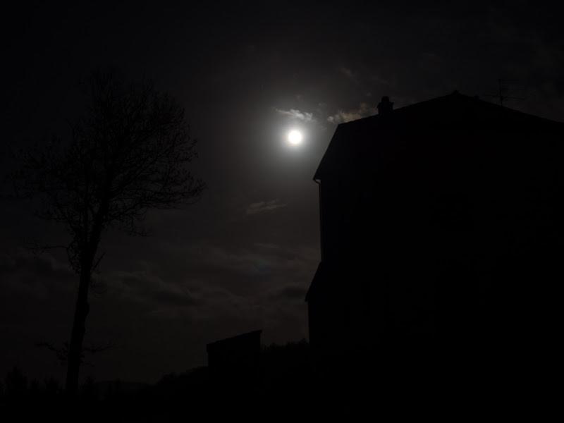 L'albero, la luna, il buio. di anija