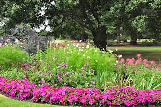 Photo: Impatiens, Dahlia, Cosmos, Cleome, Hemerocallis Kew - Royal Botanical Gardens