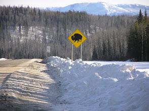 Photo: Bison Warning Sign