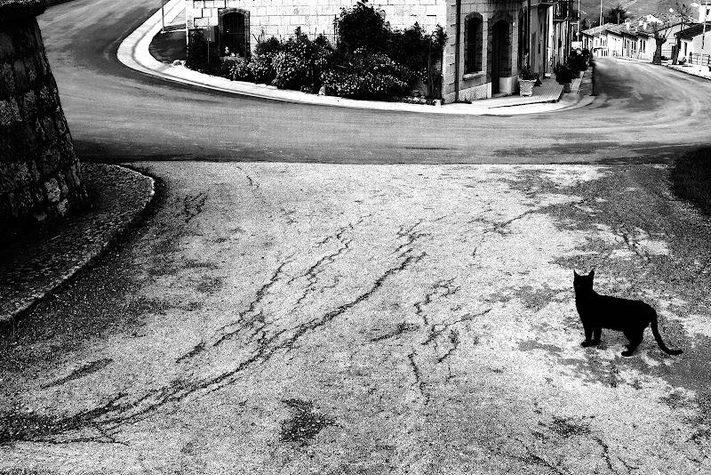 il gatto nero di faranfaluca