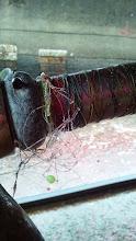 Photo: シャフトには、PEラインとエサ釣りの仕掛けがたんまり付いてます。