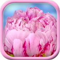 Pink flower blossom live theme icon