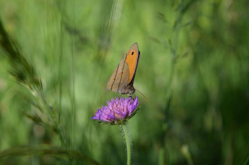 Farfalla sul fiore di Gabrielemme