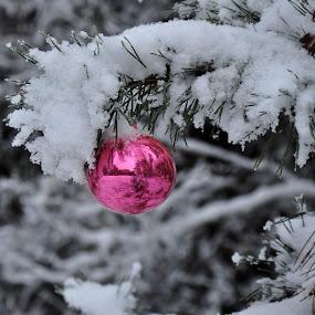 Waiting for Christmas by Albina Jasinskaite - Public Holidays Christmas ( winter, pwcholidays, toy, snow, christmas, holidays,  )