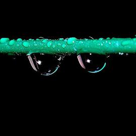 Raindrops by Govindarajan Raghavan - Abstract Macro (  )
