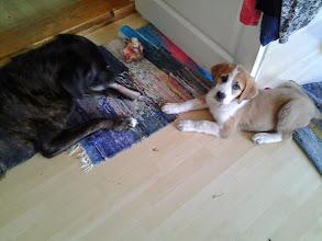 Photo: Ison koiran väsytys, pikkuhiljaa...