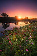 Photo: A Fresh Morning Ruhrtal, Mülheim a.d. Ruhr, Germany  Shot on my way to work on a cool October morning. The mist over the water cleared very quickly with the rising sun, which brought the flowers in the foreground to shine.  #landscapes #sunrisephotos #landscapetuesday #landscapearttuesday #amazinglandscapes