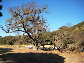 Photo: Since these limbs were still alive (for the moment) it made measuring the tree a challenge.
