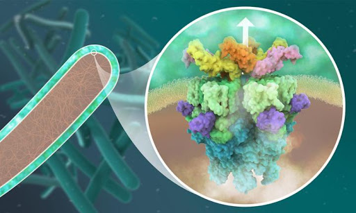 Structural biology reveals new opportunities to combat tuberculosis