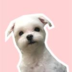 Suma_beauty🇬🇧代購
