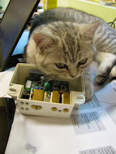 Photo: cat and electricity meter