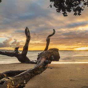 d u s k | c o l o r s | b e a c h by Anupam Hatui - Landscapes Sunsets & Sunrises ( tree, sunset, beachscape, landscape, objects, dusk, new zealand,  )