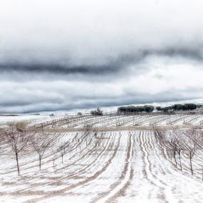 Winter at Ribera del Duero-Spain by Daly Sda - Landscapes Prairies, Meadows & Fields ( winter, riberadelduero, snow,  )