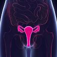 Global Vagina Health