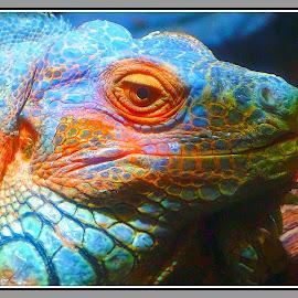 Portrait of a lizard... by Morris Kleyman - Digital Art Animals ( animals, colors, art images, portraits, digital,  )