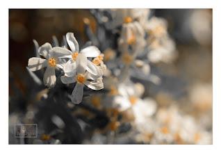 Photo: Eastern Sierras-20120715-297
