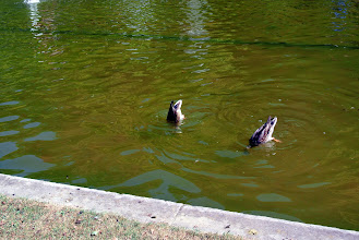 Photo: DUCKIES