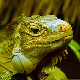 by Rupesh Patel - Animals Reptiles (  )