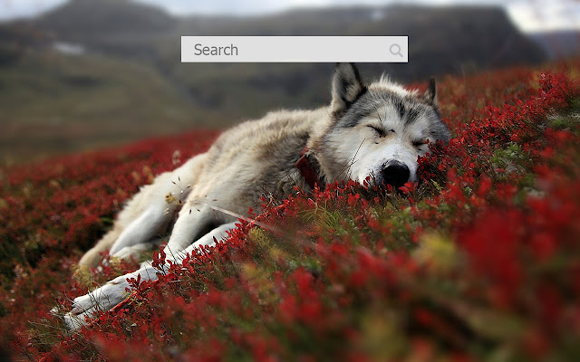 wolves HD themes