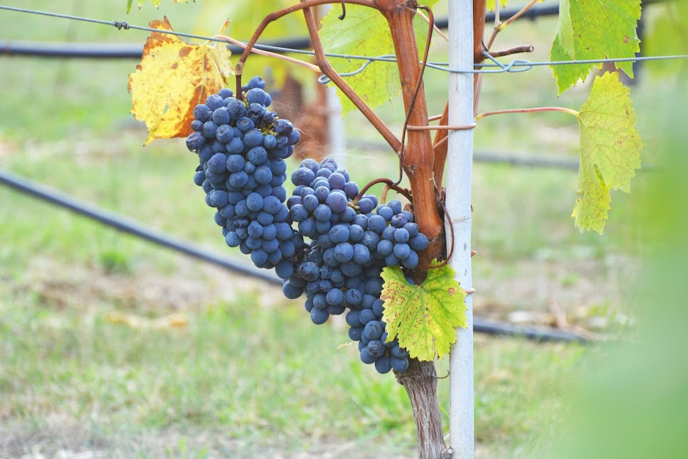 chianti-wijnstreek