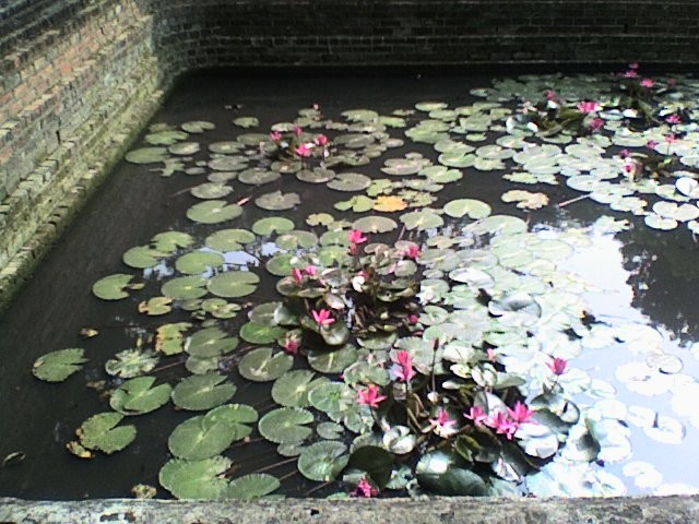 riflessi in un laghetto di hanoi-vietnam di lucia6982