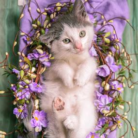 Wiscar 6 by Anita Meis - Animals - Cats Kittens ( kitten, shoot, cute, newborn, eyes )