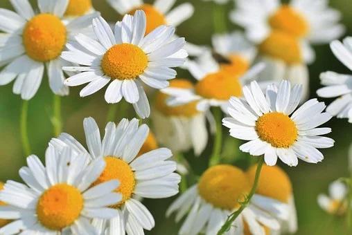 des plantes pour digérer et exprimer nos émotions