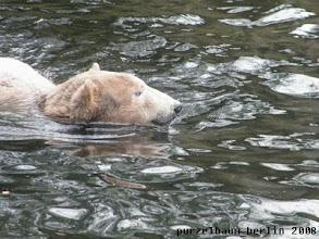 Photo: Alles in Ordnung drinnen und draussen - Knut geht baden ;-)