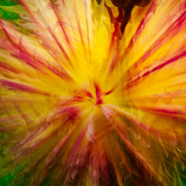 by Jim Jones - Abstract Light Painting ( art, flowers, abstract, colorful, flower )