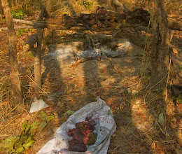 Photo: Fresh meat on the poacher's camp Carne fresca no acampamento dos caçadores