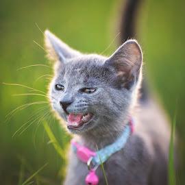 by Stephanie Espinoza - Animals - Cats Kittens (  )