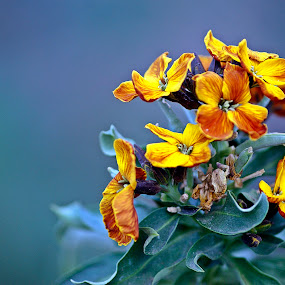 Golden Little Flowers by Mircea Bogdan - Nature Up Close Flowers - 2011-2013 ( nature, yellow, flower )