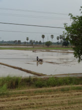 Photo: Paysage en train entre Lop Buri et Physanulok