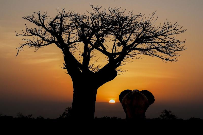 Mal d'Africa.... di Rickytre