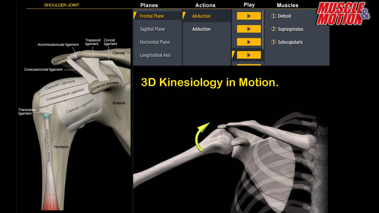 Muscle and Motion Anatomy- screenshot